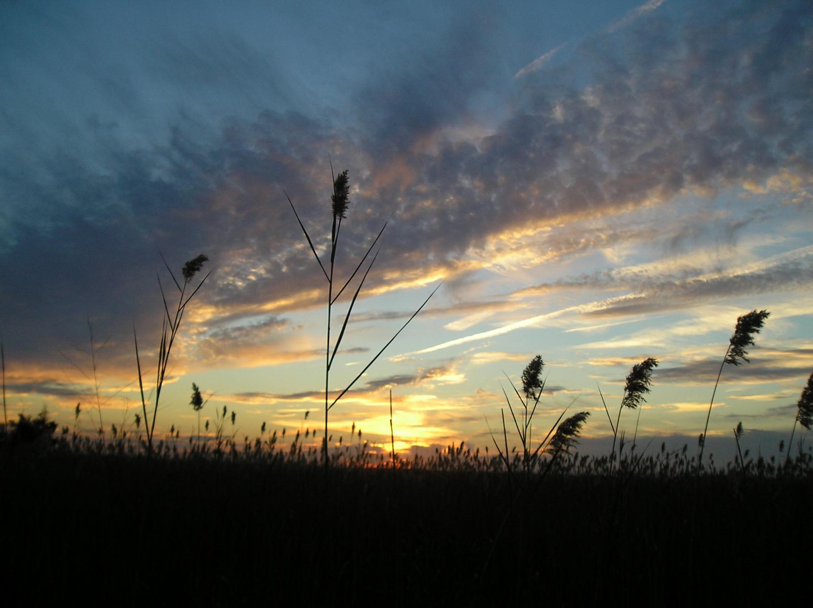 Marsh sky
