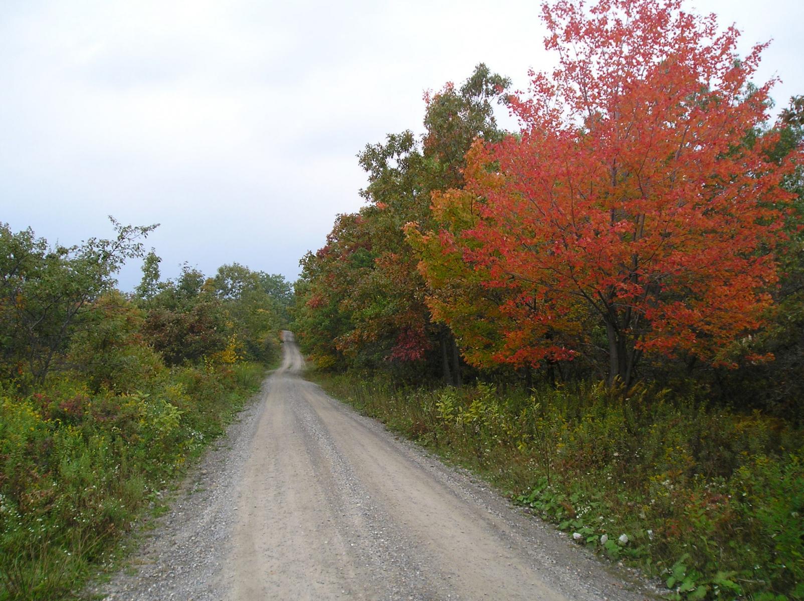 Chipmunk road