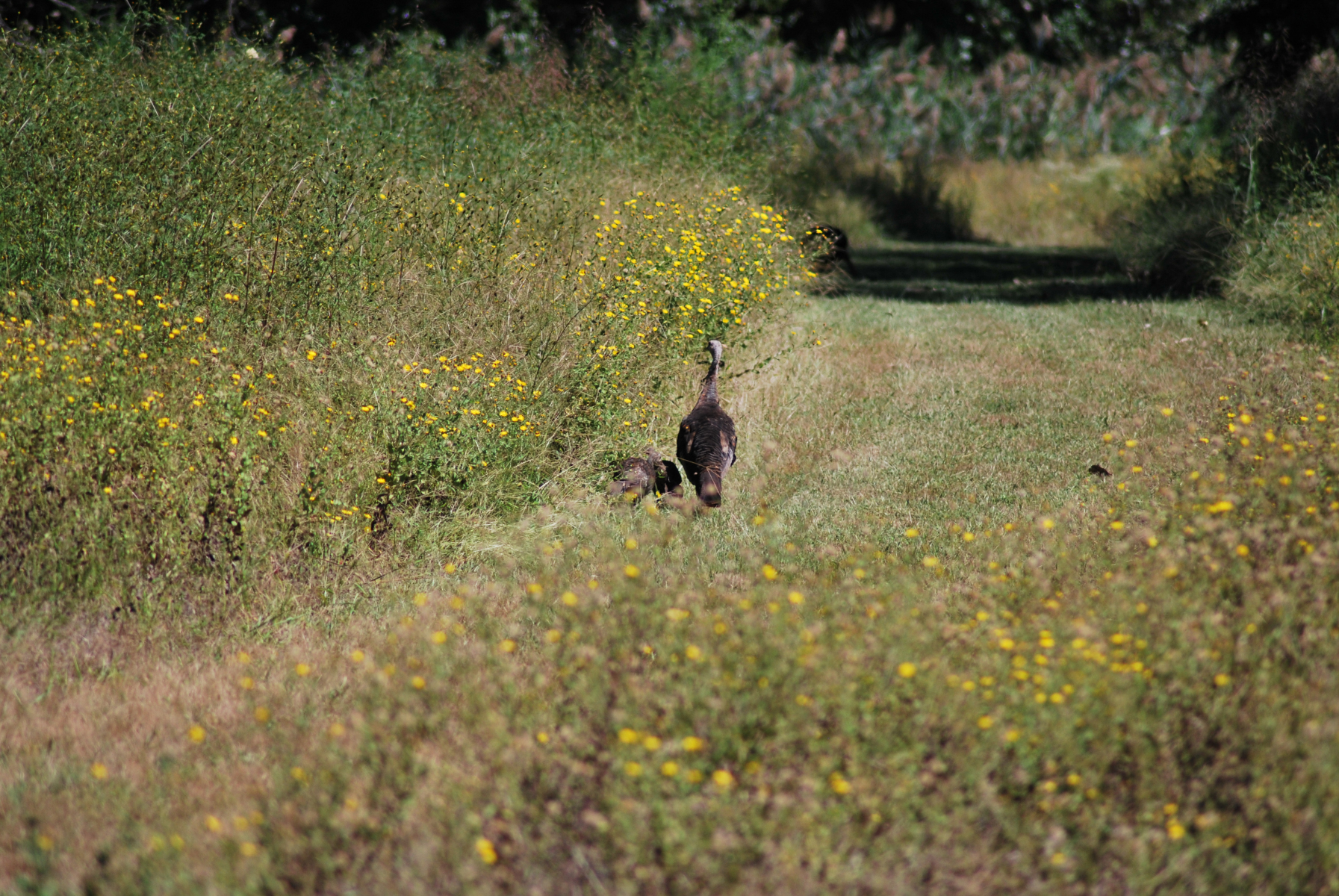 wildlife2-19